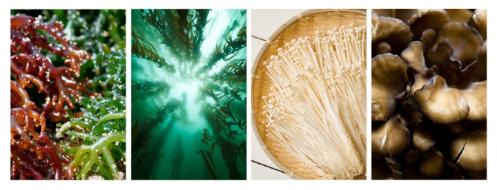 shroomalgaecollage